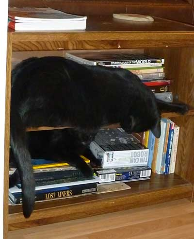 Cats on bookshelf
