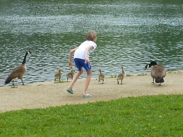 Pretending to be a goose at Kiwanis Lake in York