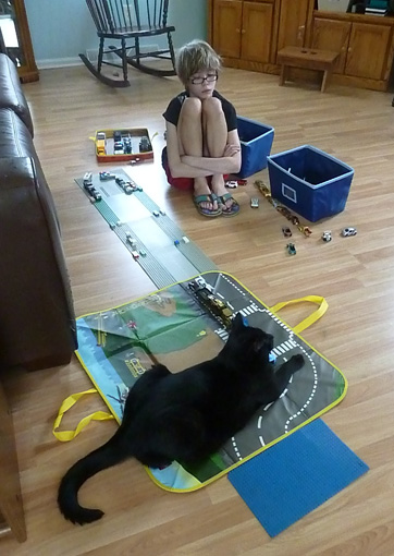 Cat playing with toy cars