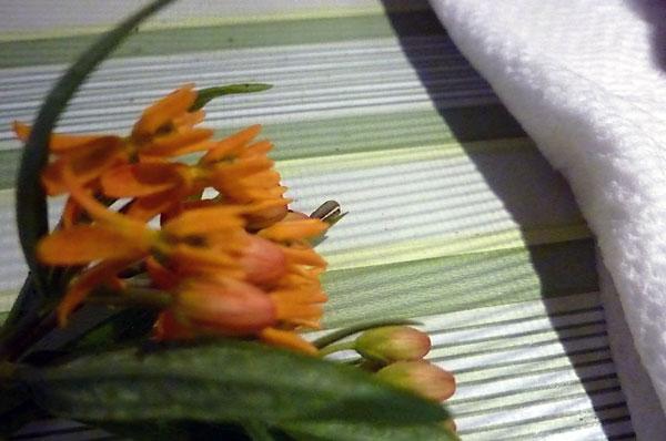 Hatching a butterfly from a caterpillar