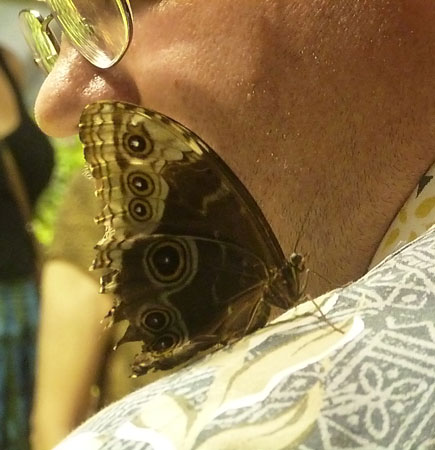 Butterfly Experience at the Smithsonian Museum of Natural History in Washington, D.C.