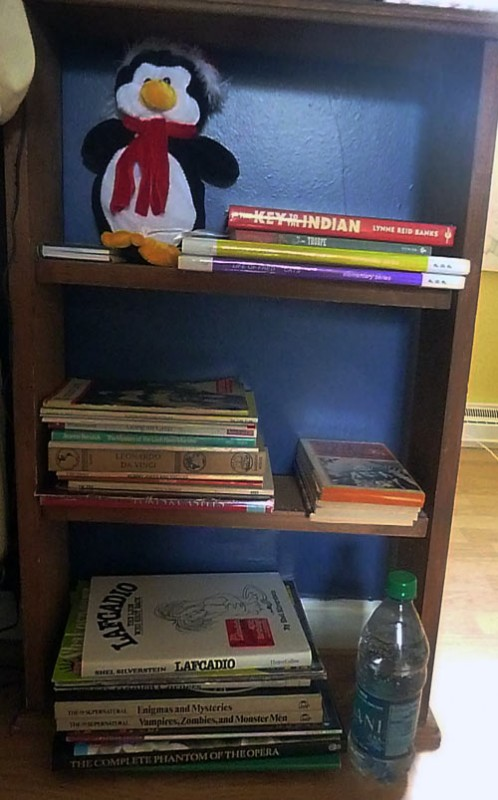Homeschoolers' bookshelf in teenage daughter's bedroom
