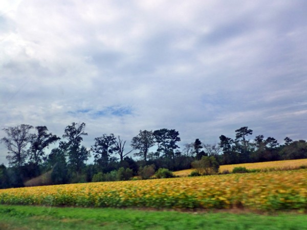 Virginia farmland outside of Chincoteague
