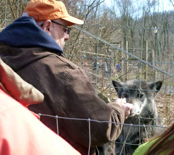Tour guide Chuck Rineer at the Wolf Sanctuary of Pennsylvania feeding the big pack