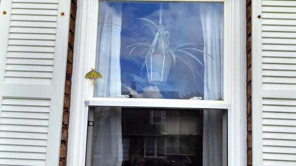 Luna moth on Pennsylvania house window