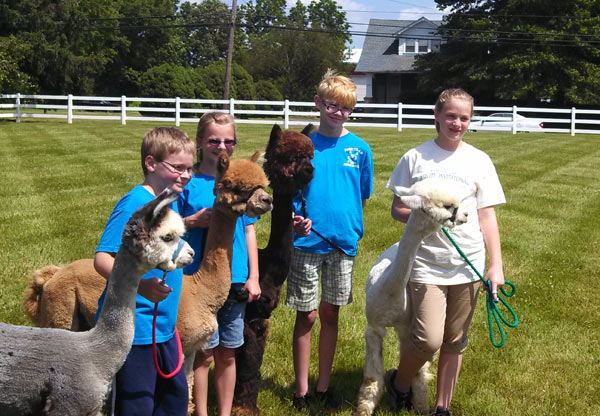 York County 4-H alpaca club at a 2013 show