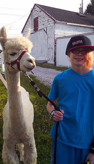Meet Jupiter, this year's 4-H project alpaca!