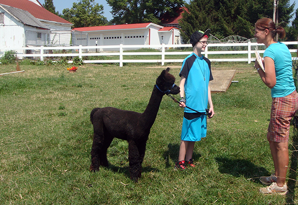 Of note this month: It's gearing up for county fair and 4-H fair time, so lots of alpaca practice. This is Sarah with Coal, this year's project animal, working on showmanship with Teresa, one of the club's awesome leaders.