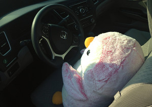 In addition to teaching Scoops the Giant Penguin some geometry, we're teaching her to drive. This is why we can't have a McLaren.