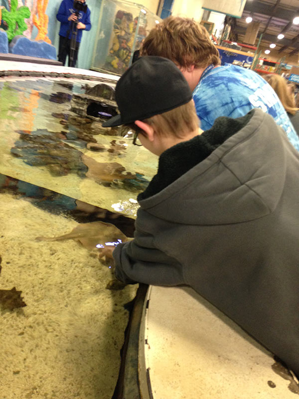 Unschooling in January 2016: One of the big highlights this month was a visit to a local fish and pet store that has its own stingray tank. On the weekends, they have stingray feedings, and here, Sarah got to help!