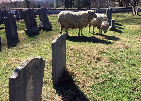 Unschool Rules unschooling wrapup - cemetery sheep